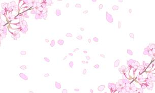 桜のイラスト 背景素材 のイラスト素材 [FYI04804048]