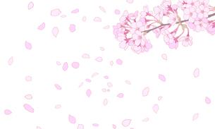 桜のイラスト 背景素材 のイラスト素材 [FYI04804049]