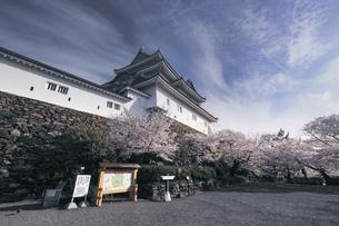 和歌山城天守閣と桜。の写真素材 [FYI04804052]