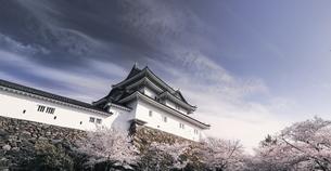 和歌山城天守閣と桜。の写真素材 [FYI04804053]