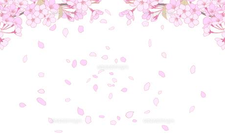 桜のイラスト 背景素材 のイラスト素材 [FYI04804054]