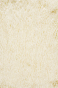 白色の毛皮素材の写真素材 [FYI04804057]