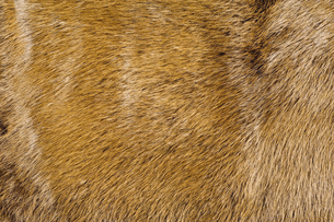 毛皮素材の背景の写真素材 [FYI04804058]