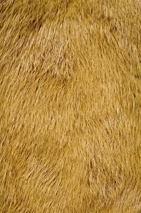 毛皮素材の背景の写真素材 [FYI04804060]