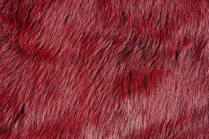 赤色の毛皮素材の写真素材 [FYI04804064]