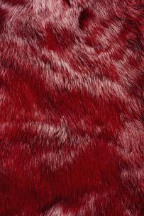 赤色の毛皮素材の写真素材 [FYI04804065]