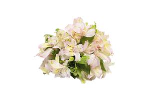 アルストロメリアの花束の写真素材 [FYI04804073]