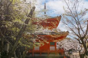 赤い仏塔と春の桜の写真素材 [FYI04804519]