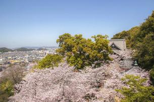 和歌山・紀三井寺の境内を覆う満開の桜の写真素材 [FYI04804551]