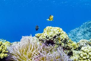 美しい水景と魚達に出逢える真栄田岬の写真素材 [FYI04804640]