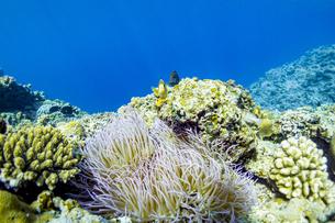 美しい水景と魚達に出逢える真栄田岬の写真素材 [FYI04804641]