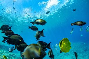 美しい水景と魚達に出逢える真栄田岬の写真素材 [FYI04804642]
