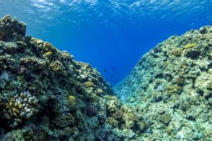 美しい水景と魚達に出逢える真栄田岬の写真素材 [FYI04804644]