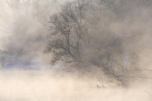 音羽橋から見る気嵐の写真素材 [FYI04804805]
