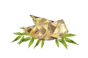 タケノコの水彩画のイラスト素材 [FYI04804992]