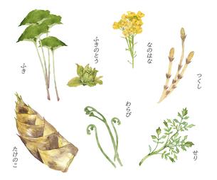 春の山菜の水彩画セットのイラスト素材 [FYI04804994]