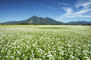 蕎麦畑と磐梯山の写真素材 [FYI04805081]