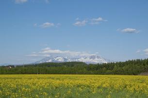 春の草原と残雪の山 大雪山の写真素材 [FYI04805213]