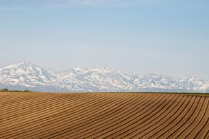 春の畑と残雪の山並み 十勝岳の写真素材 [FYI04805218]