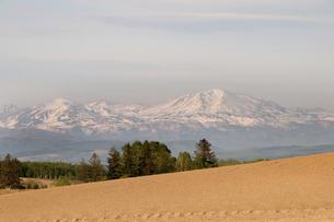 春の畑と残雪の山並み 大雪山の写真素材 [FYI04805221]