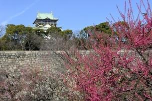 大阪城梅林,梅の花と大阪城天守閣の写真素材 [FYI04805234]