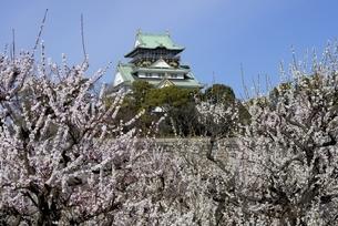 大阪城梅林,梅の花と大阪城天守閣の写真素材 [FYI04805259]