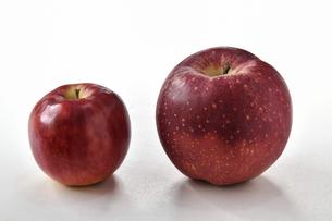 白背景の林檎の写真素材 [FYI04805399]