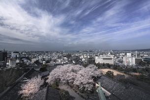 和歌山城天守閣から桜を望む。の写真素材 [FYI04805643]