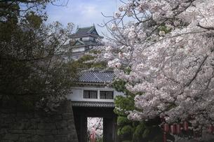 和歌山城岡口門と桜。の写真素材 [FYI04805644]