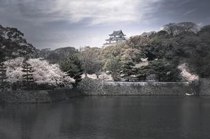 和歌山城天守閣と桜。の写真素材 [FYI04805645]