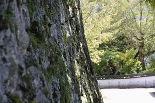 備中松山城の苔。の写真素材 [FYI04805652]