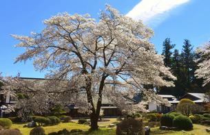 東秩父村 和紙の里の春 桜咲く頃の写真素材 [FYI04805778]