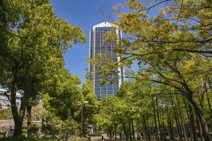 神戸・東遊園地の並木道の写真素材 [FYI04806338]