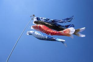 元気に泳ぐ鯉のぼりの写真素材 [FYI04806561]
