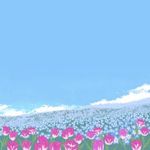 春のネモフィラとチューリップのイラスト素材 [FYI04806748]