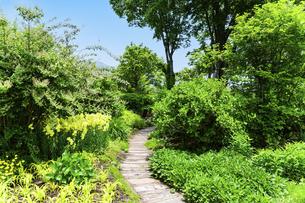 うららかな春の季節 花公園風景(くじゅう花公園)の写真素材 [FYI04807006]