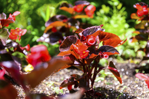 うららかな春の季節 花公園風景(くじゅう花公園)の写真素材 [FYI04807007]