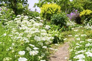 うららかな春の季節 花公園風景(くじゅう花公園)の写真素材 [FYI04807012]