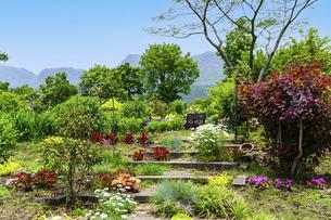 うららかな春の季節 花公園風景(くじゅう花公園)の写真素材 [FYI04807018]