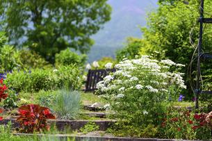 うららかな春の季節 花公園風景(くじゅう花公園)の写真素材 [FYI04807019]