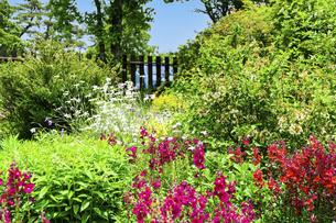 うららかな春の季節 花公園風景(くじゅう花公園)の写真素材 [FYI04807023]