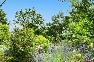 うららかな春の季節 花公園風景(くじゅう花公園)の写真素材 [FYI04807024]
