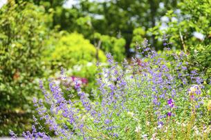 うららかな春の季節 花公園風景(くじゅう花公園)の写真素材 [FYI04807025]