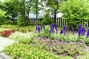 うららかな春の季節 花公園風景(くじゅう花公園)の写真素材 [FYI04807031]
