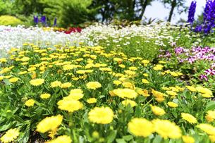 うららかな春の季節 花公園風景(くじゅう花公園)の写真素材 [FYI04807032]