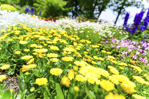 うららかな春の季節 花公園風景(くじゅう花公園)の写真素材 [FYI04807033]