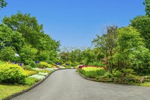 うららかな春の季節 花公園風景(くじゅう花公園)の写真素材 [FYI04807036]