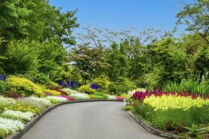 うららかな春の季節 花公園風景(くじゅう花公園)の写真素材 [FYI04807037]