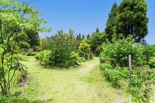 うららかな春の季節 花公園風景(くじゅう花公園)の写真素材 [FYI04807067]