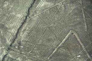 ナスカの地上絵 クモの写真素材 [FYI04807149]